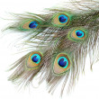 Peacock feathers on white background close-up — Stock Photo #11176081