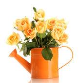 Beautiful bouquet of roses in watering can isolated on white — Stock Photo
