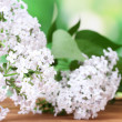 Branch of pink lilac on green background close-up — Stock Photo #11265469