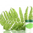Stock Photo: Jar of cream with branch of fern isolated on white