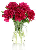 Beautiful pink peonies in glass jar with bow isolated on white — Stock Photo