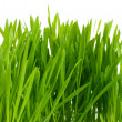 Stock Photo: Beautiful green grass isolted on white