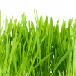 Beautiful green grass isolted on white — Stock Photo