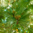 Branch of fir-tree in garden — Stock Photo