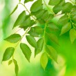 Beautiful green twig on green background — Stock Photo