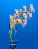 Chestnut flowers in a glass on bright colorful background — Stock Photo