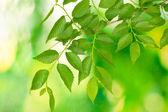 Beautiful green twig on green background — Stock Photo