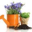 Watering can, tools and plants in flowerpot isolated on white — Stock Photo #11319759