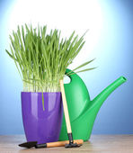 Beautiful grass in a flowerpot, watering can and garden tools on wooden table on blue background — Stock Photo