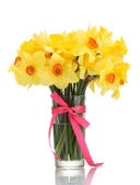 Beautiful yellow daffodils in transparent vase with bow isolated on white — Stock Photo