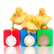 Foto de Stock  : Three duckling on championship podium isolated on white