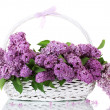 Beautiful lilac flowers in basket isolated on white — Stock Photo
