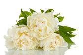 Güzel peonies üzerinde beyaz izole — Stok fotoğraf