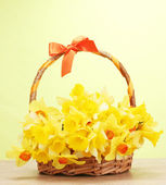 Beautiful yellow daffodils in basket with bow on wooden table on green background — Stock Photo