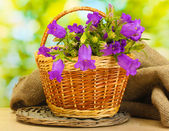Blue bell flowers in basket and burlap fabric on wooden table on green background — Stock Photo