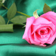 Beautiful rose on green cloth — 图库照片