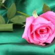 Beautiful rose on green cloth — ストック写真 #11360385