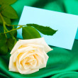 Stock Photo: Beautiful rose on green cloth