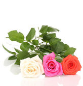 Lindas rosas isoladas no branco — Fotografia Stock