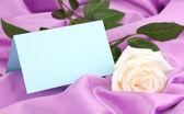 Beautiful rose on lilac cloth — Stock Photo