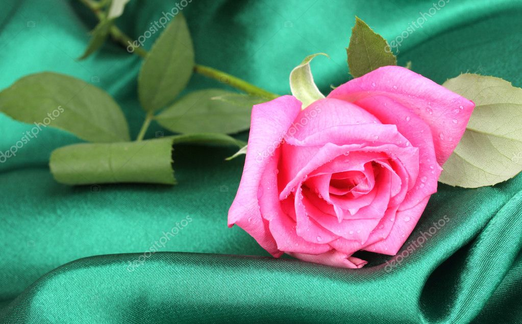 Beautiful rose on green cloth — Stock Photo #11360385