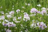 Wildflowers field close-up — Stock Photo