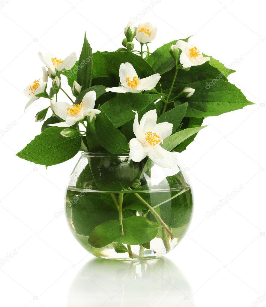 sch ne jasmin blumen in der vase die isoliert auf weiss stockfoto 11402689. Black Bedroom Furniture Sets. Home Design Ideas