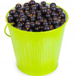 Black currant in metal bucket isolated on white — Stock Photo #11418814