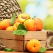 Ripe apricots with leaves in wooden box on wooden table on green background — Stock Photo #11436431