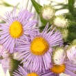 Beautiful bouquet of bright wildflowers, close up — Stock Photo #11438010