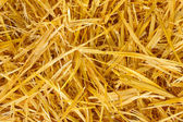 Golden straw texture background close-up — Stock Photo
