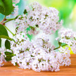 Branch of pink lilac on green background  close-up — Stock Photo