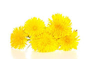 Dandelion flowers isolated on white — Stock Photo