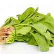 Fresh spinach isolated on white — Stock Photo