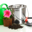 Watering can, bucket, tools and plants in flowerpot isolated on white — Stock Photo