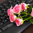 Pink roses on keyboard close-up internet communication - Stockfoto