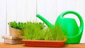 Green grass in a flowerpots and watering can on white wooden background — Stock Photo
