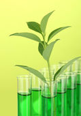 Test-tubes with a green solution and the plant on yellow background close-up — Stock Photo