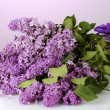 Beautiful lilac flowers on purple background — Stock Photo