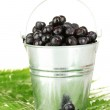 Ripe blueberries in silver bucket on fern close-up — Stock Photo