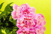 Three pink peonies on green background — Stock Photo