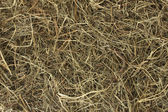 Golden hay texture background close-up — Stock Photo