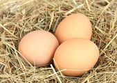 Brown eggs in a nest of hay close-up — Stock Photo
