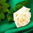 Beautiful rose on green cloth — Stock Photo #11490151
