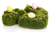 Green moss with eggs isolated on white — Stockfoto