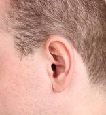 Menschliche Ohr Nahaufnahme isoliert auf weiss — Stockfoto