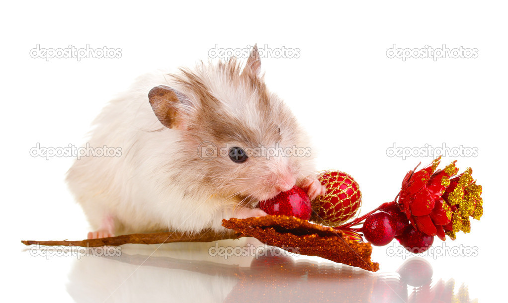 Cute hamster and autumn twig isolated white — Stock Photo #11510137
