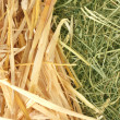 Golden hay and straw texture background close-up — Stock Photo #11523058