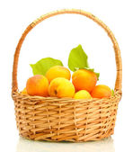 Ripe apricots with green leaves in basket isolated on white — Foto de Stock