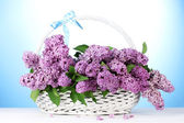 Beautiful lilac flowers in basket on blue background — Stock Photo